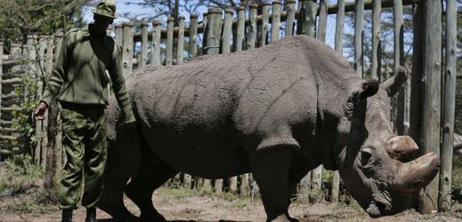 Sudan, poslední severní bílý nosorožec, zemřel v březnu tohoto roku.