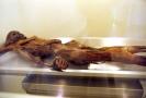 Ötzi vystavený v muzeu.