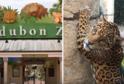 Jaguár Valero zabil v zoo v New Orleans šest zvířat.