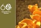 Letní Flora Olomouc bude ve znamení oslav 60 let od první květinové přehlídky.