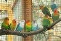 Desítky papoušků jsou k vidění v Botanické zahradě Univerzity Karlovy.