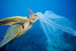 Plasty v oceánu.