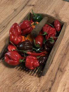 Pražská restaurace Sia pořádá chilli festival.