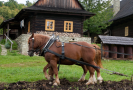 Valašské muzeum zve na Podzim na poli a v chalupě.