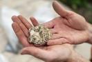 Hradečtí archeologové objevili u historického schodiště Bono publico část pravěkého valu z doby bronzové, který sloužil jako opevnění a v něm zlomky keramiky i pazourkové nástroje.