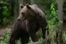 Medvěd (ilustrační snímek).