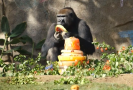 Gorilák Frank.