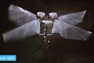 Hmyzí robot, kterého vědci sestrojili.