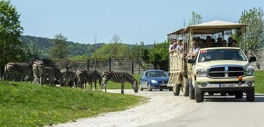 Safaribus v zoologické zahradě ve Dvoře Králové nad Labem.