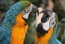 Mezinárodní výstava papoušků se koná v Olomouci.