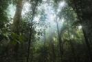 Deštný prales (ilustrační foto).