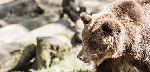 zoo dnes chodí rychlost datování v oblasti dfw