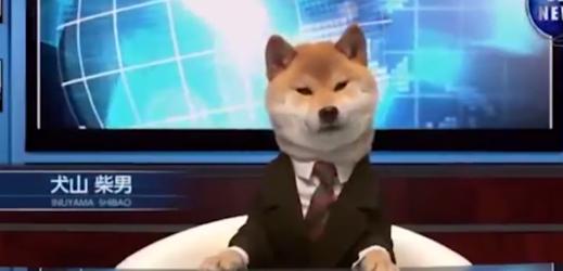 Pes v obleku je novou moderátorskou hvězdou v Japonsku.