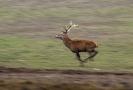 Nejvíce se prodává jelení a srnčí maso.