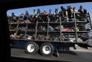 První migranti se dostali k hranici Mexika s USA.