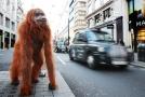 Robotický orangutan řetěze Iceland.