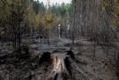 Letošní sucho způsobilo požáry na řadě míst.
