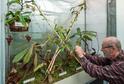 Na snímku je ředitel botanické zahrady Miloslav Studnička u nové uzavřené vitríny, kde zahradníci vytvořili speciální klima pro vysokohorské láčkovky.