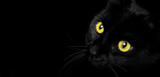 Krásná kočička je zdobena jemnými čirými zirkony a působí dokonale rafinovaným stylem.