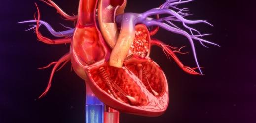 Anatomie lidského srdce (ilustrační foto).