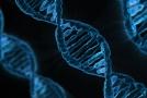 Respirace DNA.