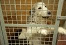 Útulky pražských strážníků přijaly letos zatím 2850 zvířat.