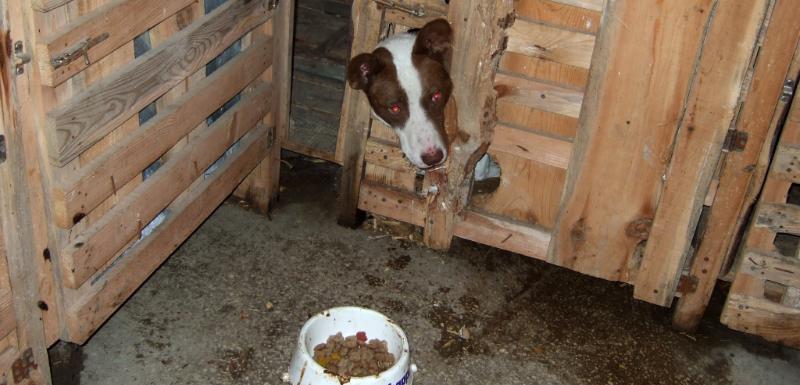 abd065526f6 Pospíšil  Nízké pokuty za týrání zvířat nikoho neodradí