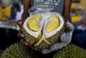 Durian cibetkový (ilustrační foto).