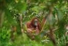 Fotografií roku a vítězem zatím posledního ročníku soutěže se stal snímek Lukáše Zemana, který podle něj zachycuje samici orangutana s umírajícím potomkem na Borneu.