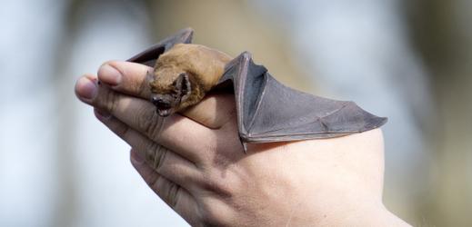 Vypouštění netopýrů, pražská záchranná stanice pro volně žijící živočichy.