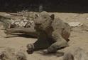 Torzo těla lvice, která zemřela v patrně nejhorší zoo na světě, v Gaze.