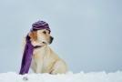 Ve velkých mrazech nezapomeňte teple obléct i svého mazlíčka.