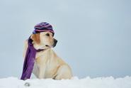Česko zasáhnou tuhé mrazy, sněžit příliš nebude