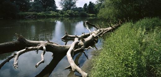 Řeka Dyje na jižní Moravě.