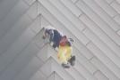 Francouzský Spiderman leze po budovách bez jištění.