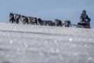 Snímek je ze závodu psích spřežení Šediváčkův long.