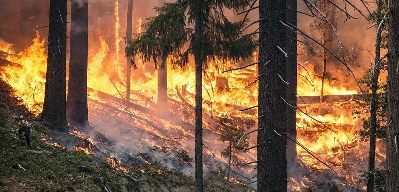Novy Zeland Utok Photo: Nový Zéland Bojuje S Lesními Požáry. Evakuuje Tisíce Lidí