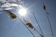 Teplé počasí nekončí. Abnormální teploty vydrží i v březnu