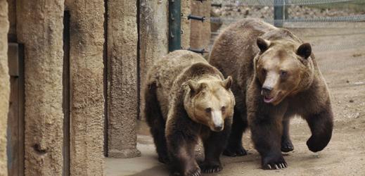 Medvědi z plzeňské zoo.