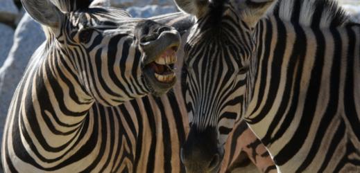 Zoo připravila víkend dobrovolného vstupného.