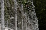 Trestancům zločinci pašovali drogy v tělech potkanů