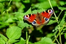 Současná podoba krajiny už motýlům nevyhovuje (ilustrační foto).