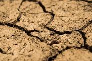 Situace je zoufalá. Sucho nepřestává trápit české zemědělce
