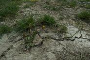 Bude letos sucho? Rozhodnou nadcházející týdny