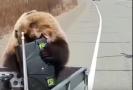 Medvěd lovcům na Kamčatce ukradl ledničku.