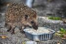 Mít na zahradě ježka je velmi populární.