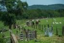 Rodinná farma Výrov v jihočeském Husinci (na snímku z 10. června 2019), která získává ceny v soutěžích o regionální potraviny, se specializuje na výrobky z kozího mléka. Majitelka hospodářství Lucie Schmiedová hospodaří s manželem a dcerou na 16 hektarech. Mají 70 koz, z toho je 45 dojných, ve stádu jsou i čtyři plemenní kozlové. Na kozy volá jmény, zvířata na zavolání přijdou. Pojmenovala 50 koz.