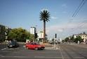Palma ve Varšavě dostala opět zdravé zelené listy.