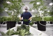 S nelegálními drogami má v ČR zkušenost zhruba třetina dospělých