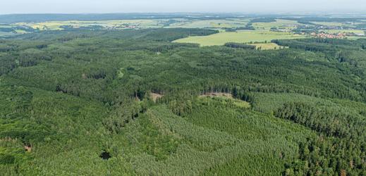 Kvůli kůrovci sadí na jihu Moravy listnaté stromy místo smrků (ilustrační foto).